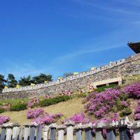 「百済歴史地区」をめぐり韓国一の桜の郷「鎮海」を訪ねる5日間の旅