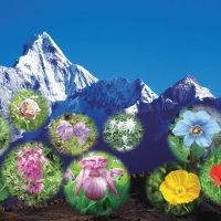 四姑娘山フラワーハイキング5日間の旅