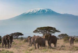キリマンジャロ登頂アルーシャ国立公園サファリ10日間
