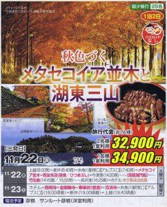 秋色づくメタセコイア並木並木と湖東三山