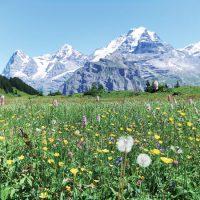 充実のスイス10日間